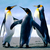 Penguins20150310-26325-aa3pxm